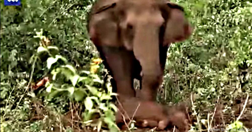 elephant-mourns-calf-1