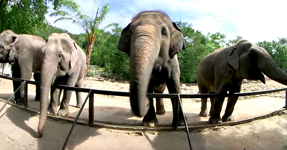 Source: YouTube/สวนสัตว์เปิดเขาเขียว Khao Kheow Open Zoo Elephants at the Khao Kheow Open Zoo.