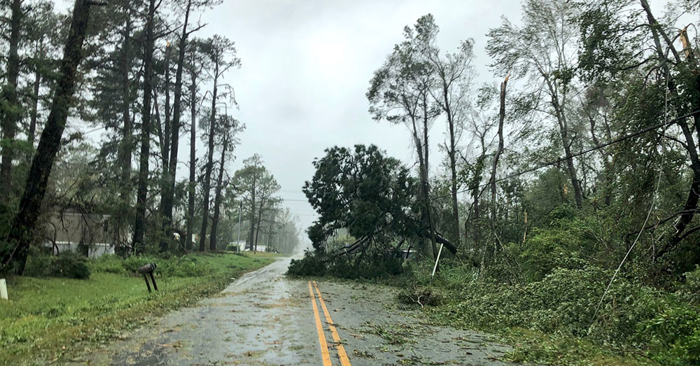 Source: Twitter/chefjoseandres Damaged trees, knocked down by Hurricane Florence.