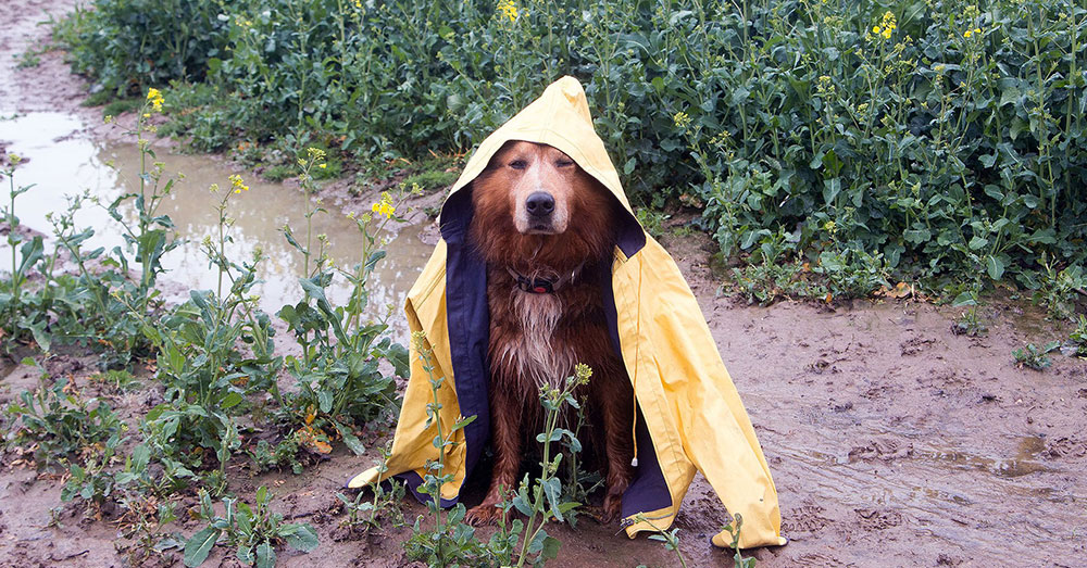 Source: Twitter/FDAanimalhealth Never leave your pet behind in a storm.