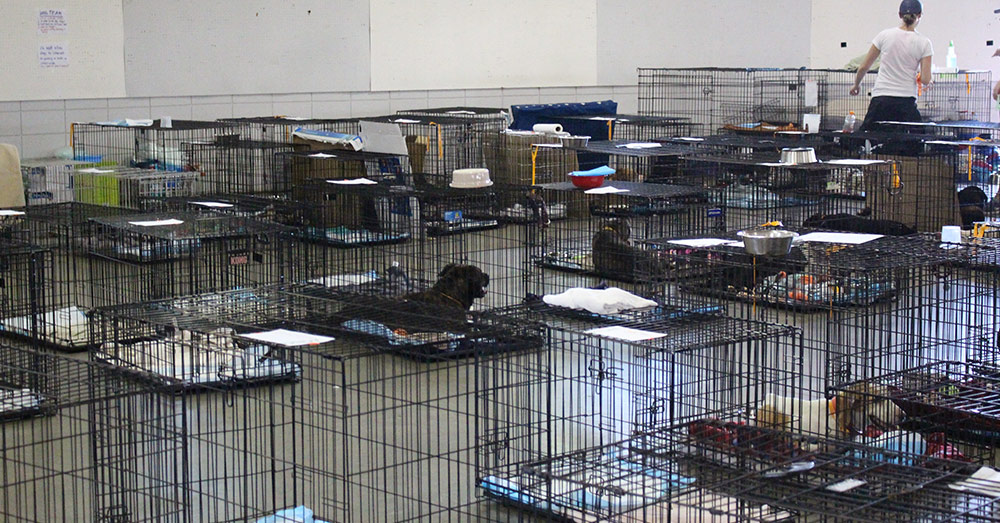 Source: SPCA of Wake County Temporary shelters are essential to helping animals survive the flooding from Florence.