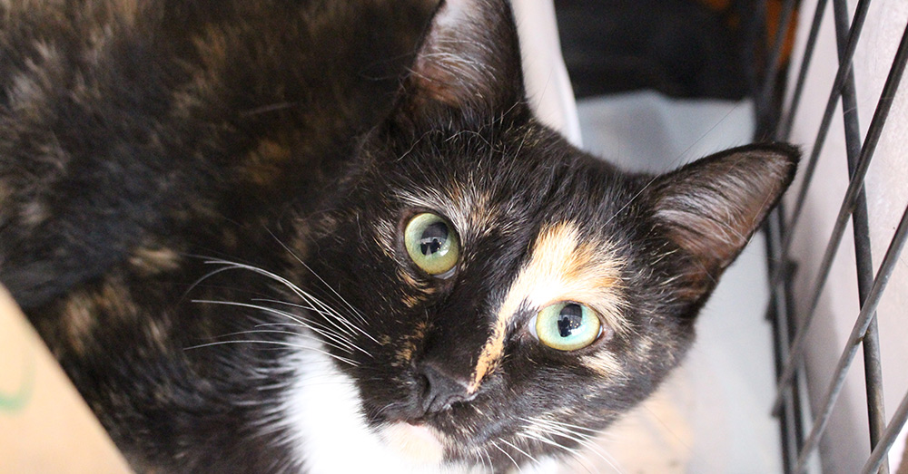 SPCA of Wake County Thanks to your donations, cats like Dinah have survived the storm.
