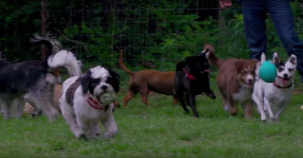 Photo: YouTube/Life in the Doghouse movie trailer