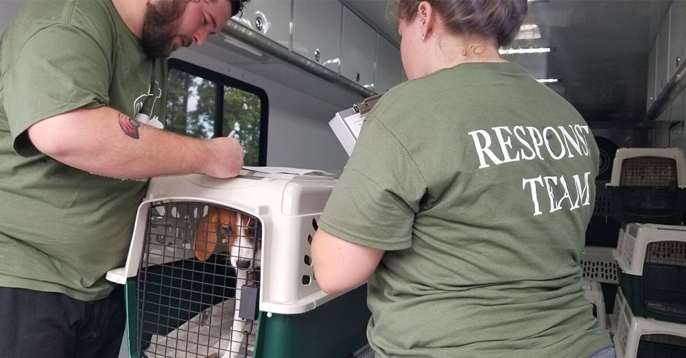 Source: Charleston Animal Society Charleston Animal Services started evacuating animals on Tuesday, Sept. 11.
