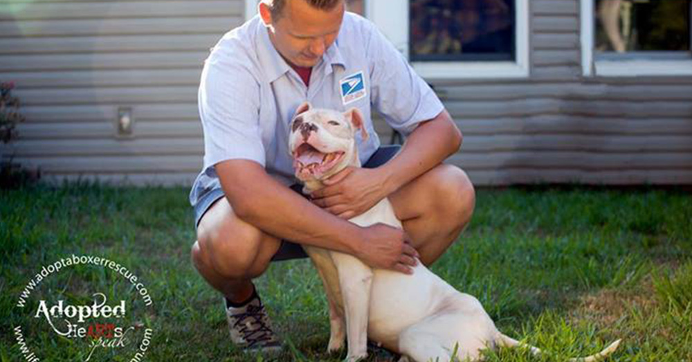 Source: Facebook/Adopt a Boxer Rescue Mail carrier Dan Targonsk will never forget Kuperus.