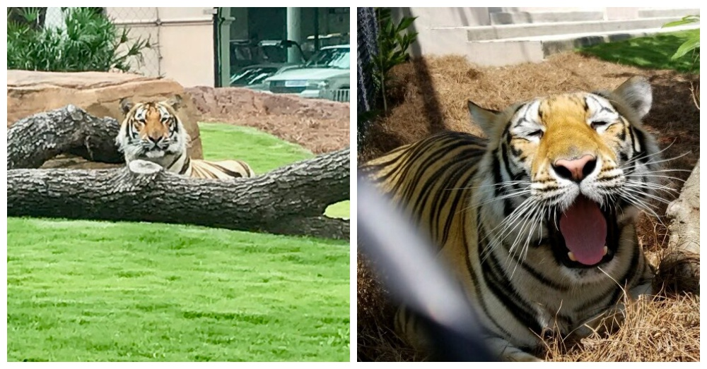 Photos: Twitter/Mike VII