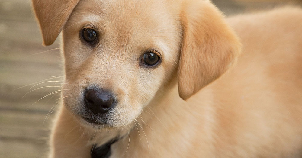 Source: Wikimedia Commons A third of all puppies bought online will become seriously ill or die before their first birthday.