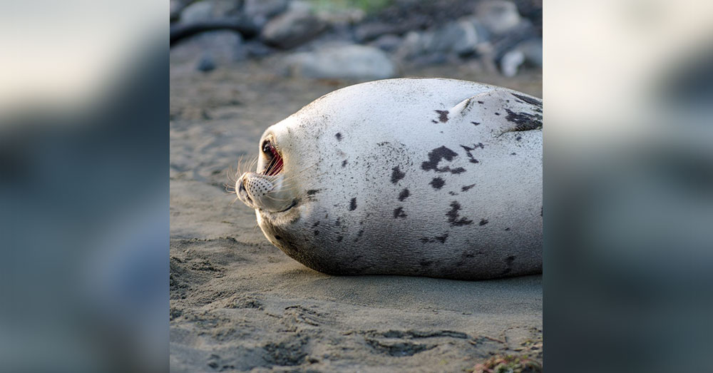 Source: CBC News The seal died two days after it was first spotted.