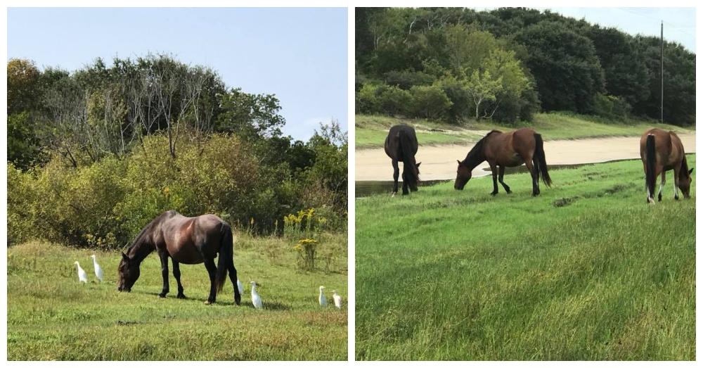 Photos: Facebook/Corolla Wild Horse Fund