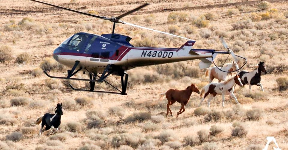 Photo: Facebook/American Wild Horse Campaign