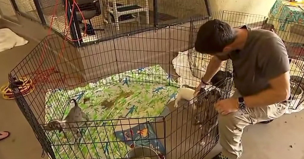 Source: YouTube/ABC News A makeshift shelter provides temporary respite for stray animals.