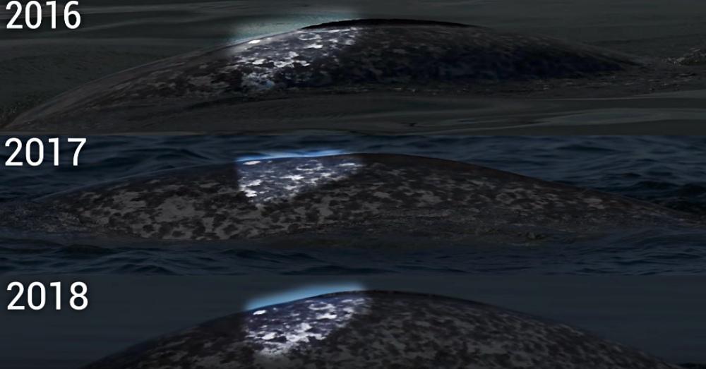 Photo: YouTube/Baleines En Direct