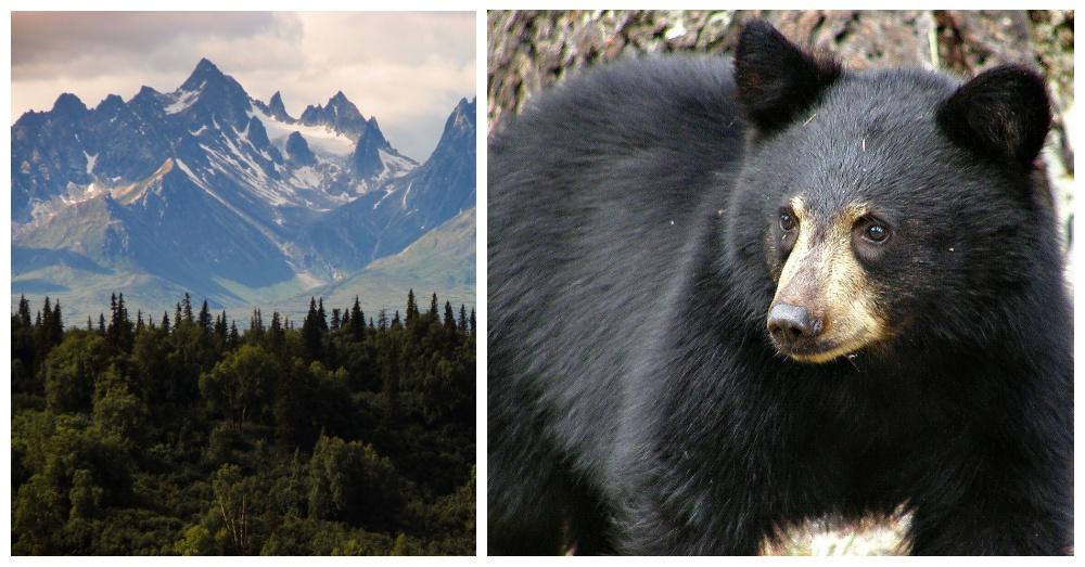 black-bear-alaska-1