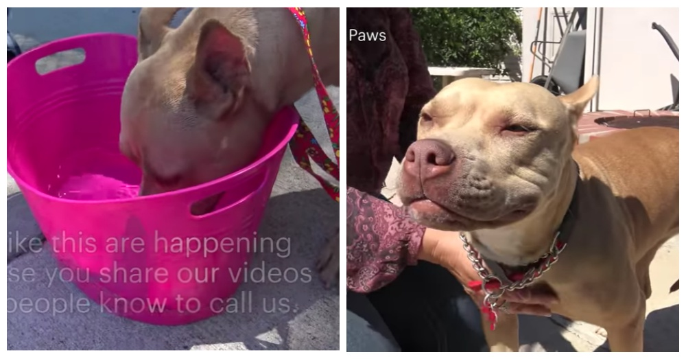 Screen Shots: YouTube/Hope For Paws