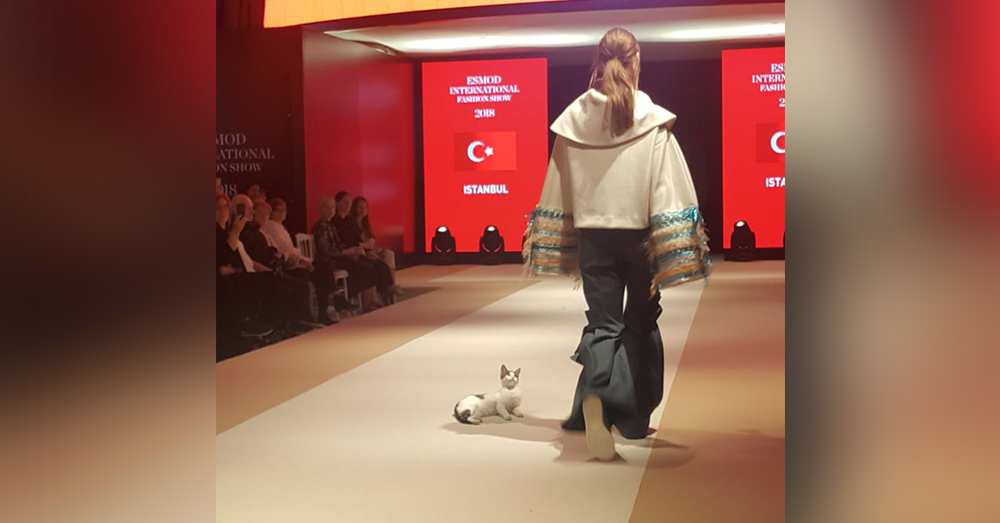 Source: Twitter/Ruhat Mengi‏ The catwalk in Istanbul is the place to be for fashion forward felines.
