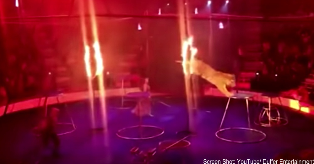 circus-tiger-russia-1