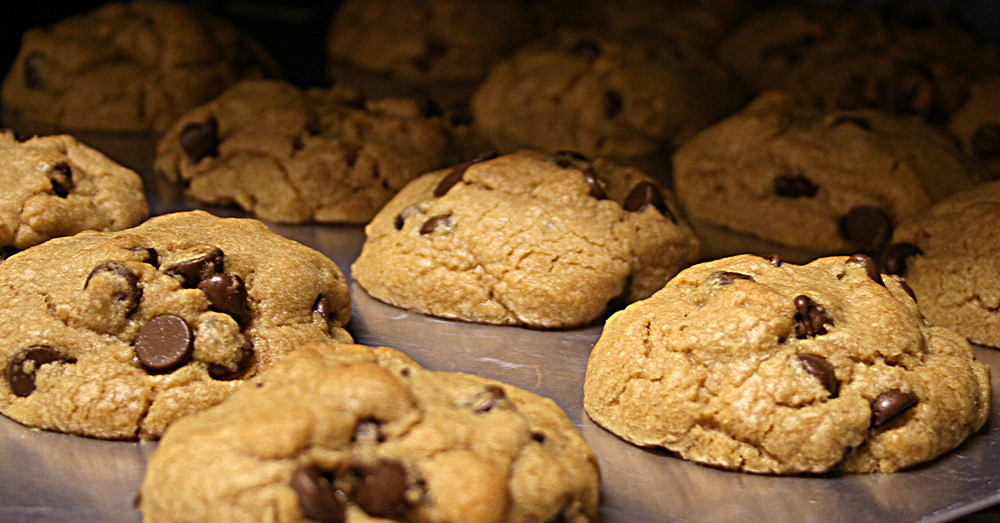 Source: Wikimedia Commons Chocolate chip cookies are not a cat's favorite food.