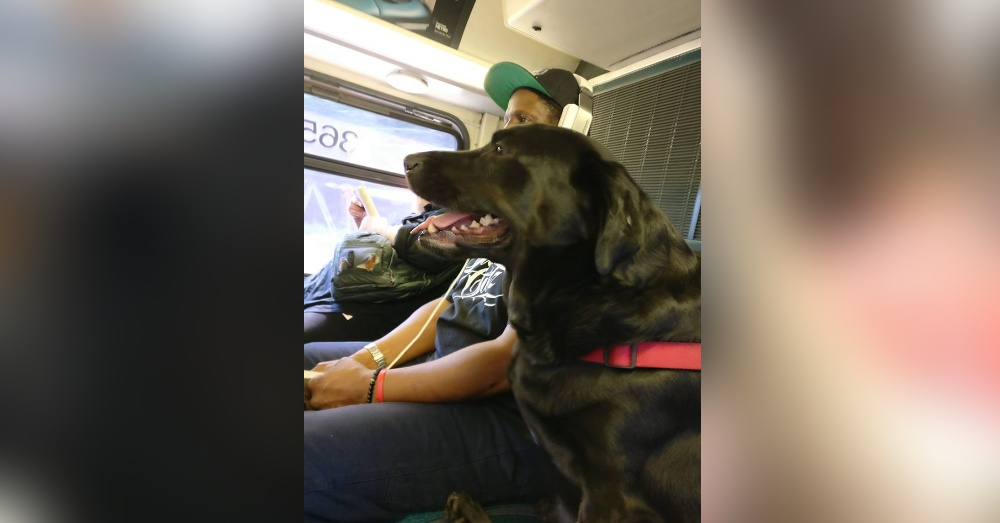 Photo: Facebook/Eclipse Seattle's Bus Riding Dog