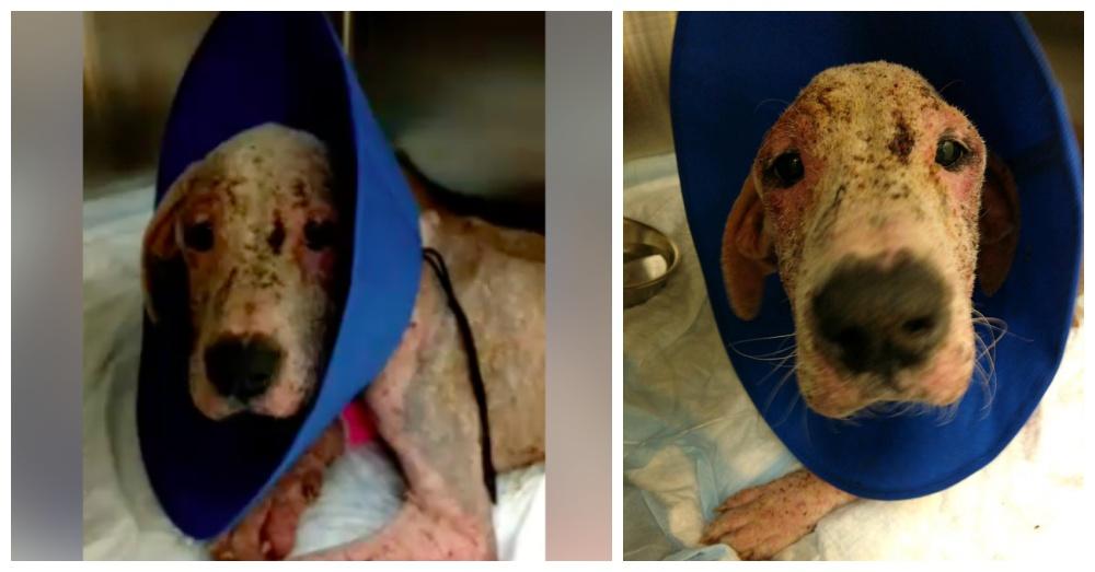Photos: Facebook/Rescue Dogs Rock NYC