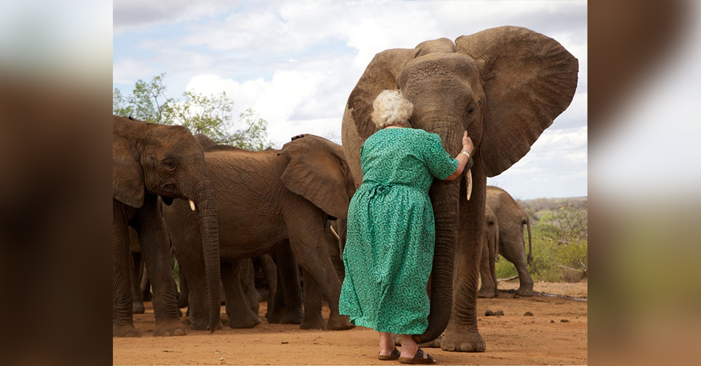 Source: Reddit/u/carlinha1289 Dame Daphne Sheldrick helped to save orphans elephants in Kenya. When she visits them, they line up to hug her.