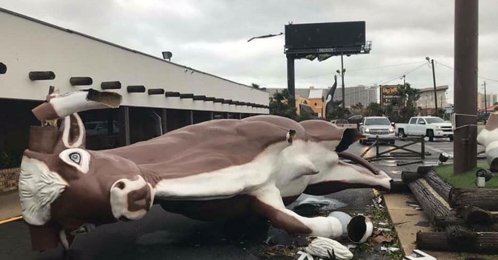 Source: Instagram/happensintheham A giant cow statue, overturned by Hurricane Michael.