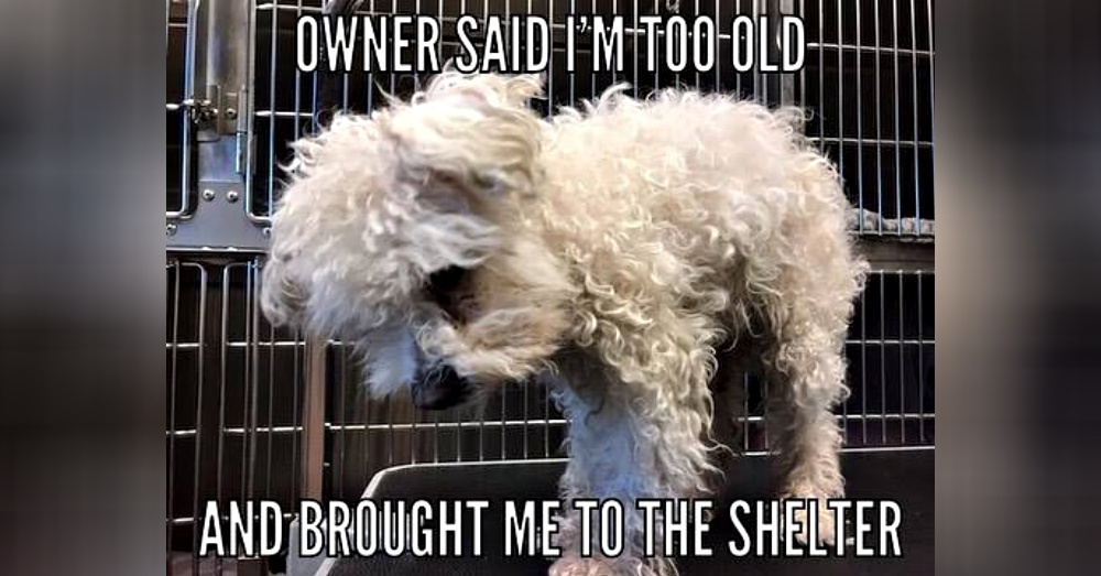 Photo: Facebook/Friends of West Valley Animal Shelter - Chatsworth, CA
