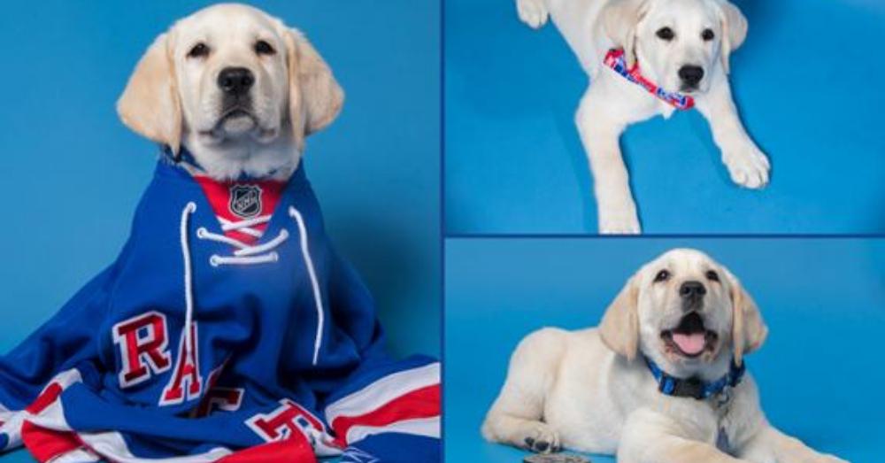 Photo: NHL.com/rangers