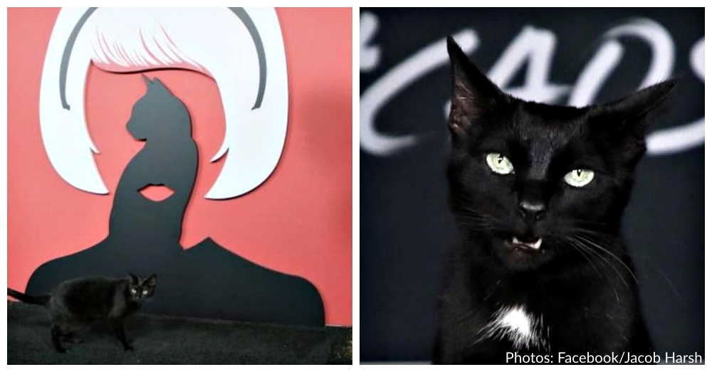salem-the-cat-1