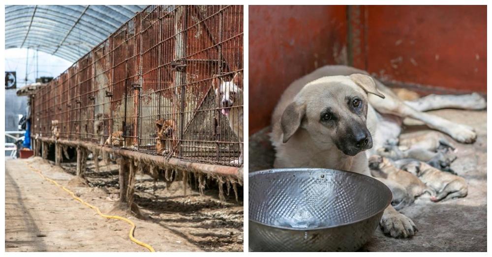 Photos: Facebook/Humane Society International
