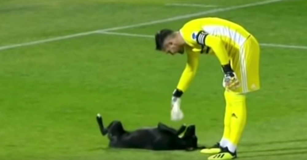 Source: YouTube/Associated Press Now that's what he ran out for...belly rubs!