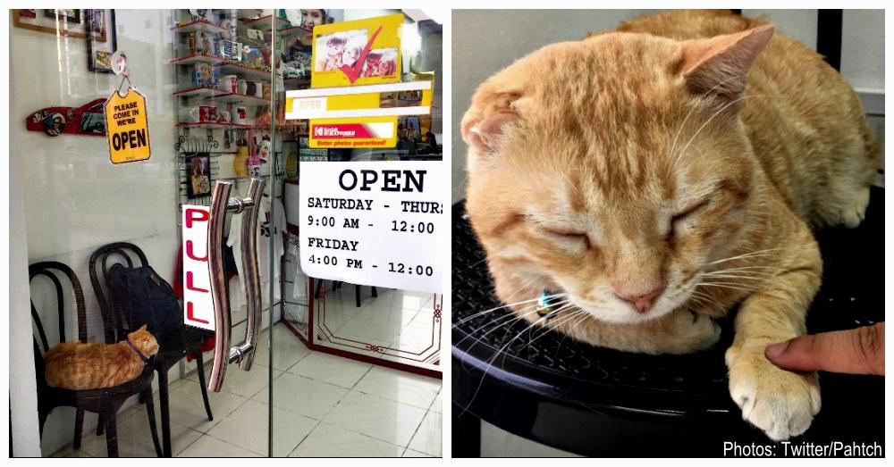 stray-cat-mascot-1