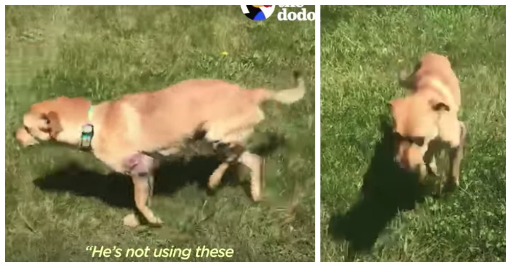 Screen Shots: YouTube/The Dodo