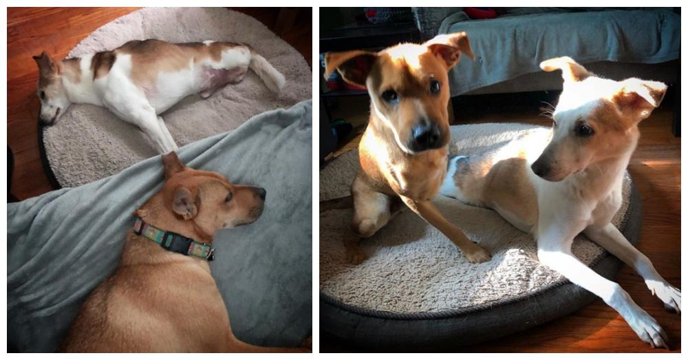 Photos: Instagram/2legdogs