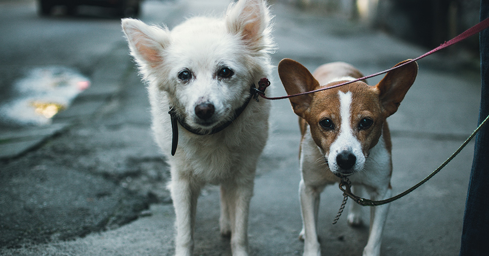 Source: Unsplash So far, China has seen fewer reports of pet-related infractions since implementing the social rating system.