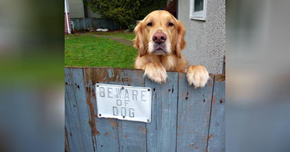 "25 ""Beware Of Dog"" Signs That Aren't Fooling Anyone"