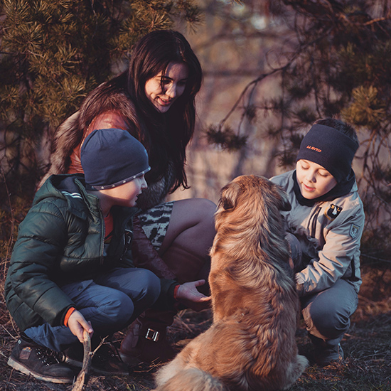 Build a safe haven for the pets of domestic violence victims