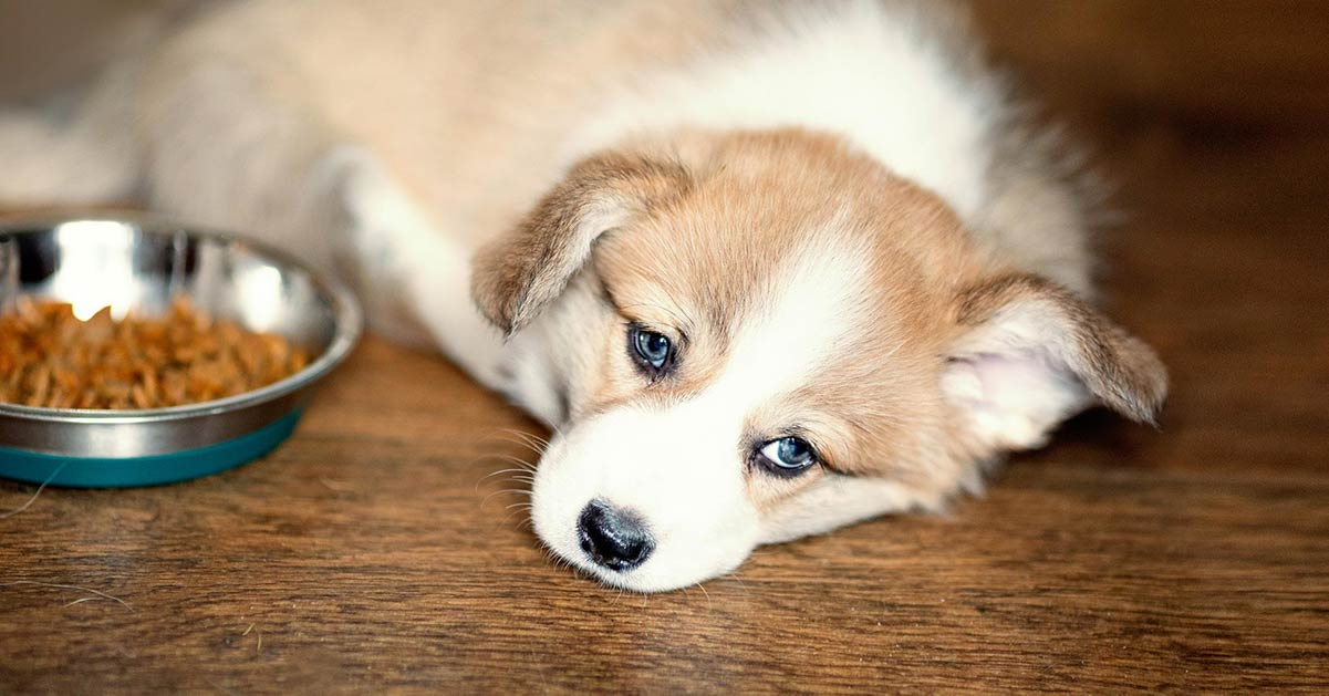 A dog lay prone near a food bowl.