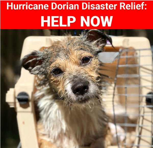 Help People and Pets Affected by Hurricane Dorian Now