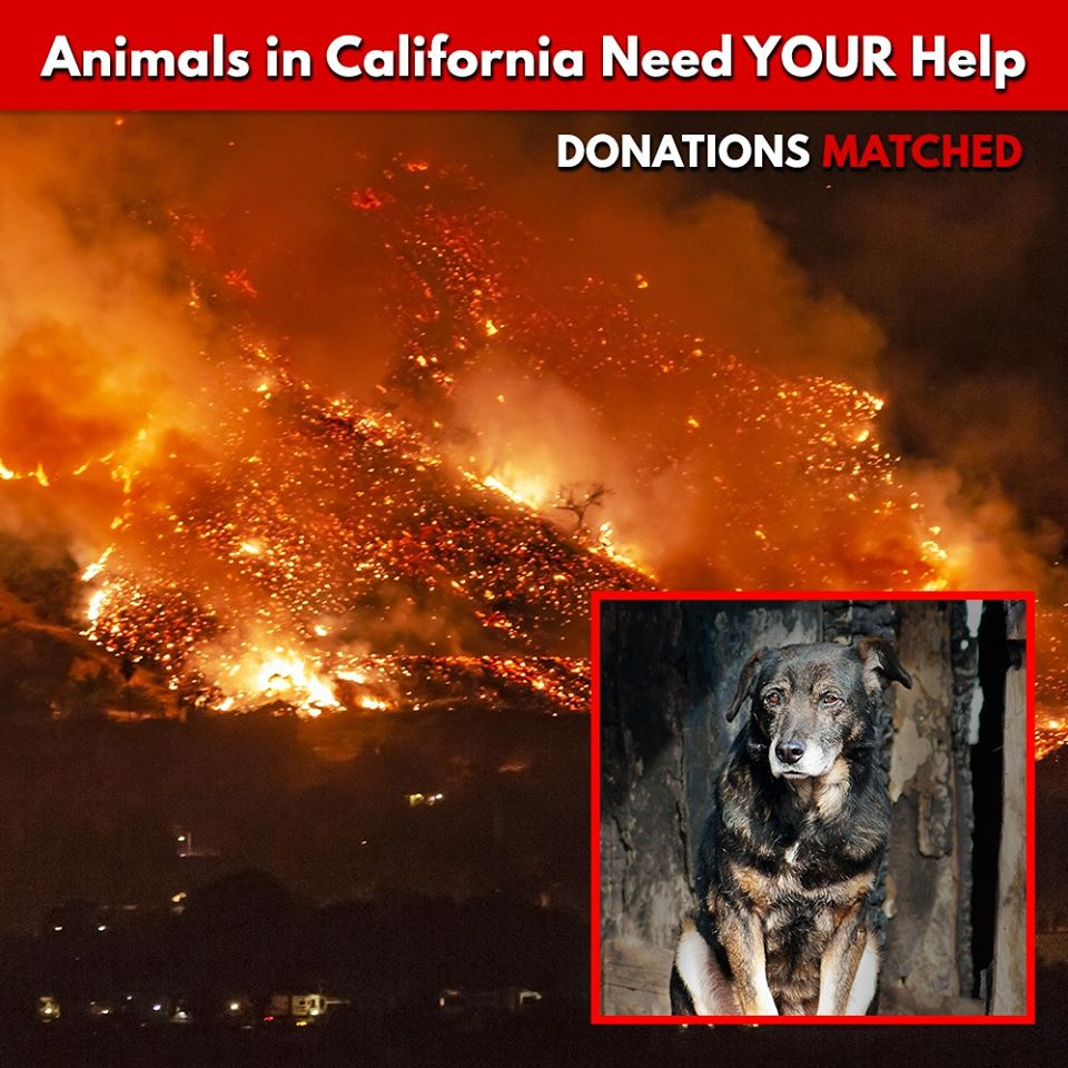 Help California Wildfire Victims Now