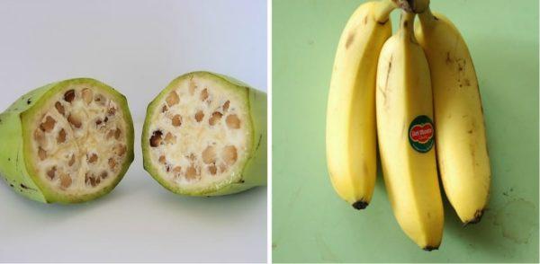 Wild-Banana-Collage-850x417-600x294.jpg