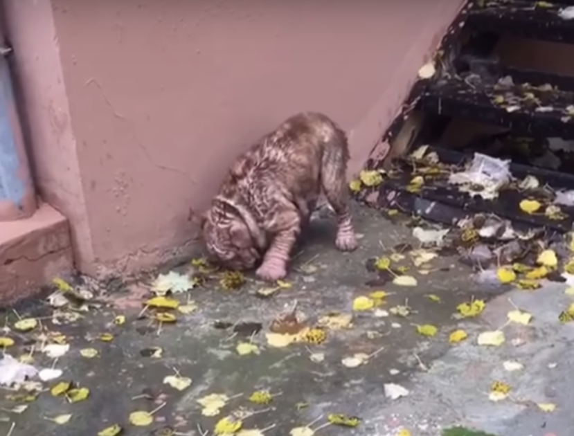 abandoned bulldog