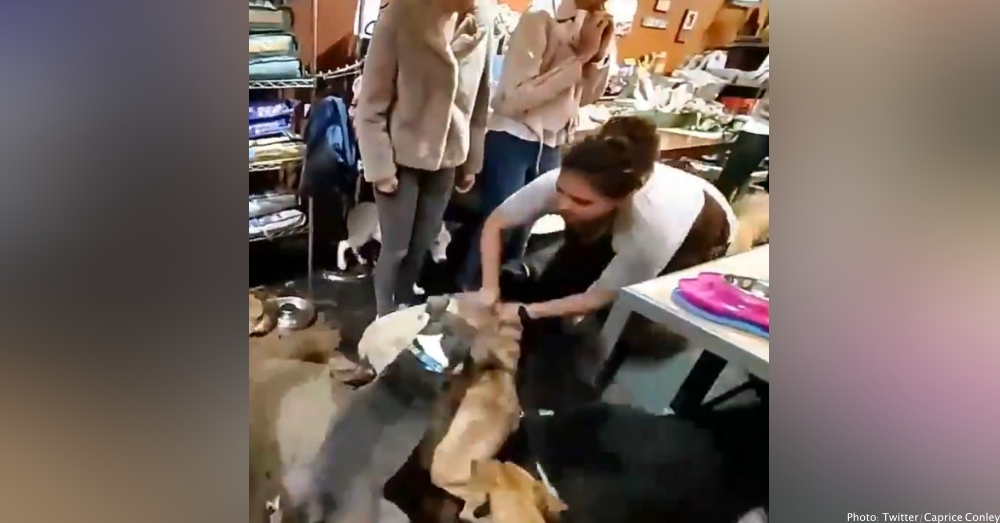 Pet Store Employee Filmed Grabbing Dog By Neck, Angrily Throwing It Onto Floor