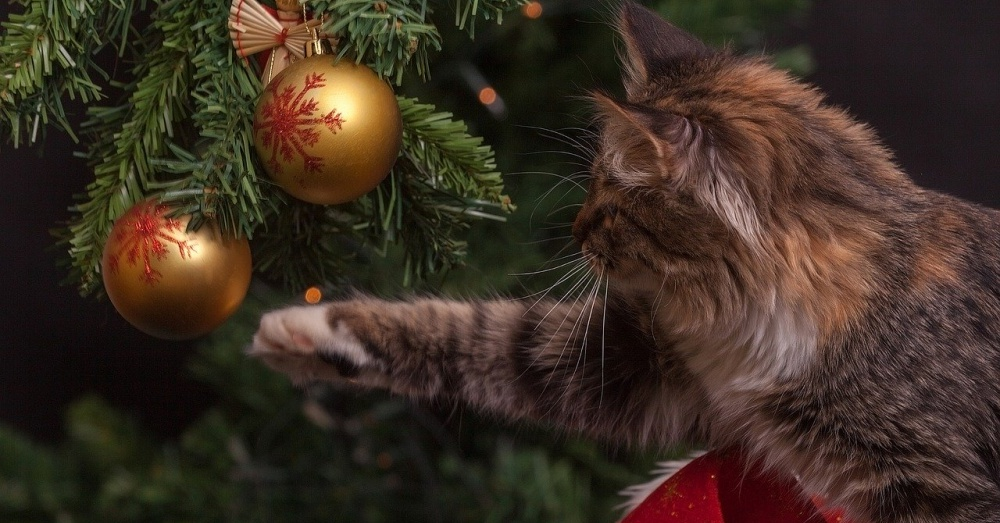 Playful Kitten Likes To Hide In Fully Decorated Christmas
