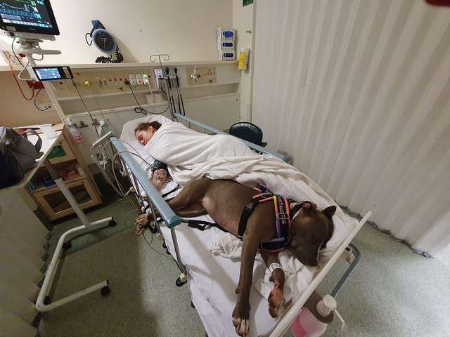 Loyal Service Dog Refuses To Leave Mom's Hospital Bed After Saving Her Life