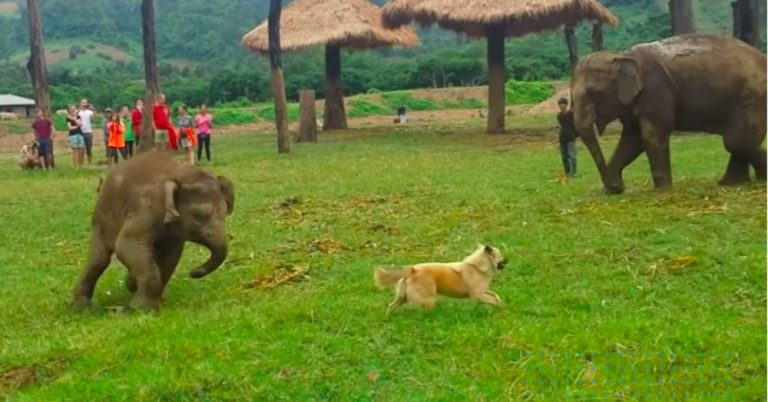 Baby Elephant Complains To Mom About Dog Annoying Him
