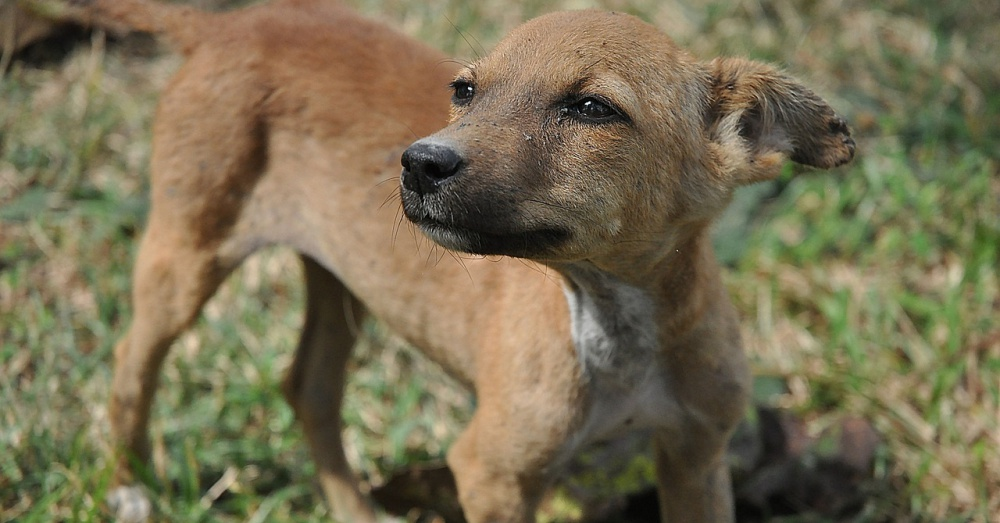 Police Departments In India Are Taking In Stray Dogs And Training Them To Be Police Dogs The Animal Rescue Site News