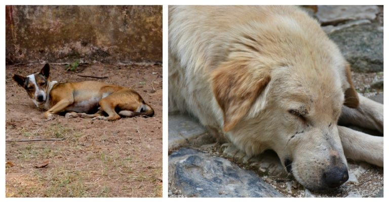 Lebanese Are Poisoning And Abandoning Their Dogs Due To Coronavirus Fears