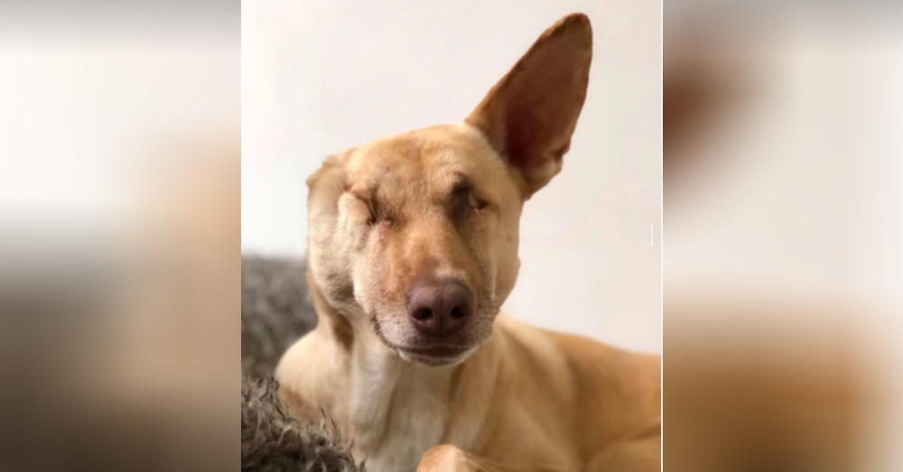 Lebanon - Woman Flies Badly Abused Dog 2,500 Miles Then Shows Her Love
