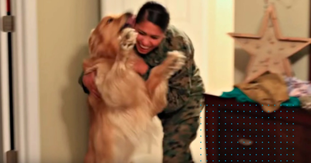 Dog Welcomes Home Owner