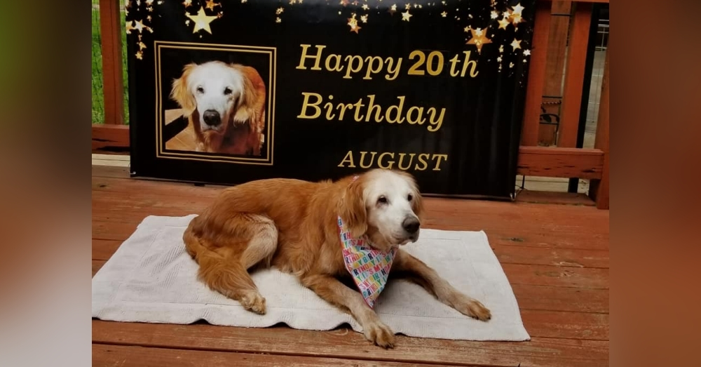 Rescued Dog Celebrates Her 20th Birthday, Becoming The World's ...